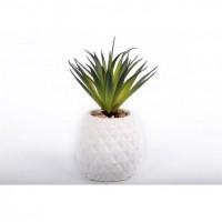 Ananas succulent - 9,5 x 22 x 9 cm
