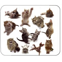 TAPIS DE SOURIS CAT GROUP X6 ALLSOP