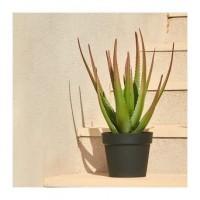 CATRAL Cactus artificiel Aloe - 81 cm
