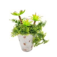 Plantes grasses dans un pot vieilli - H 22 cm