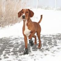 TRIXIE Bottes de protection Walker Active 2 pieces M- Noir - Pour chien
