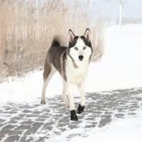 TRIXIE Bottes de protection Walker Active 2 pieces L - Noir - Pour chien