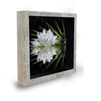 Tableau déco cadre vitrine 20x20 - Lotus zen